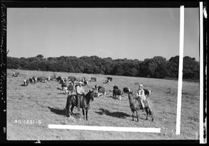 Primary view of object titled 'R. W. Robberson Ranch Cattle'.