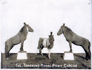 Primary view of object titled 'Col. Tompkins Royal Pony Circus'.