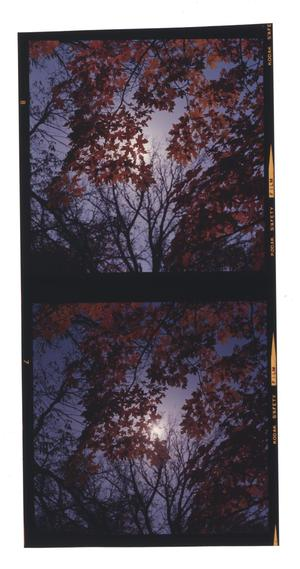 Primary view of object titled 'Fall Foliage'.