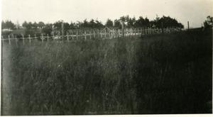 Primary view of object titled 'Cemetery'.