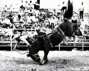 Primary view of object titled 'Kenneth Guilldry off the bronc 'XX Extra' of the Kinney Bros.'.