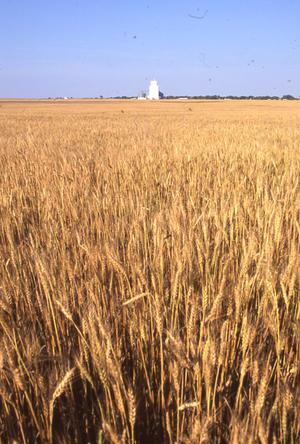 Primary view of Wheat Field and Grain Elevator
