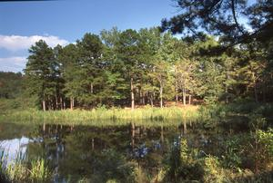 Primary view of object titled 'Cedar Lake'.