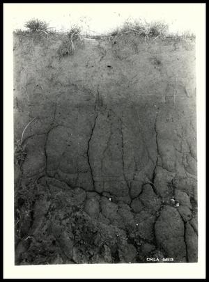 Primary view of object titled 'Fitzhugh Fine Sandy Loam'.