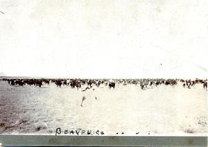 Primary view of object titled 'Cattle Scene in Beaver County'.
