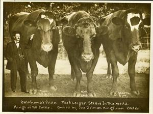 Primary view of object titled 'The Three Largest Steers in the World'.