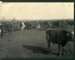 Primary view of object titled 'H. B. Johnson's Riverside Stock Farm near Chickasha'.