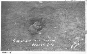 Primary view of object titled 'Prairie Dog and Burrow'.