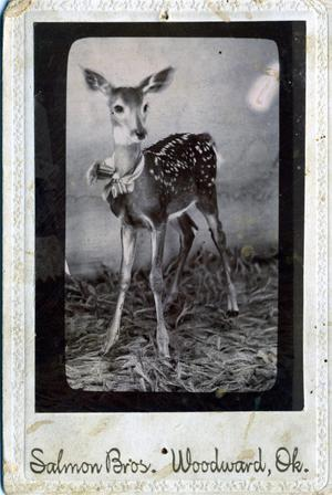 Primary view of object titled 'Fawn'.