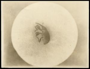 Primary view of object titled '[Photograph 2012.201.B0096.0383]'.