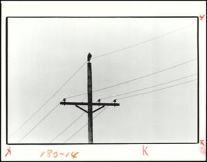 Primary view of object titled '[Photograph 2012.201.B1323.0688]'.