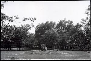 Primary view of object titled 'Flowerbed in Wheeler Park in Oklahoma City'.