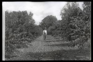 Primary view of object titled 'Peach Orchard near Tulsa'.
