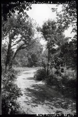 Primary view of object titled 'Drive up Tavertine Creek at the Chickasaw National Park Recreation Area near Sulphur, Oklahoma'.