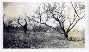Primary view of object titled 'Carl West's Orchard'.