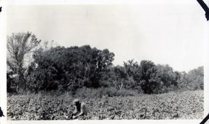 Primary view of object titled 'Man Working in a Field'.