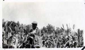Primary view of object titled 'Man in Cornfield'.