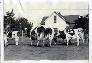 Primary view of object titled 'Milk Cattle'.