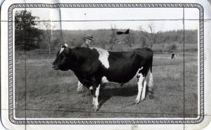 Primary view of object titled 'Good Sire, Sequoyah County 1932'.