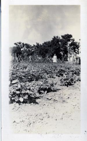 Primary view of object titled 'Mrs. Geo. Petty in Her Garden'.