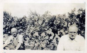 Primary view of object titled 'Grapes Growing in Cherokee County'.