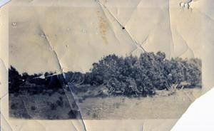 Primary view of object titled 'Cedar Landscape'.